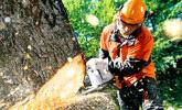 Arbeiten in der Forstwirtschaft