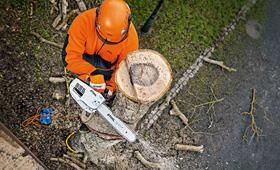 Бензопили для догляду за деревами