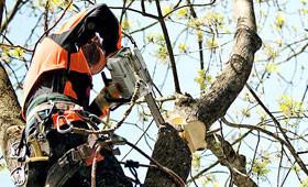Pilarki do pielęgnacji drzew