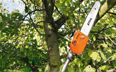 Petrol telescopic pole pruners