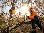 Speciální pily pro ošetřování stromů