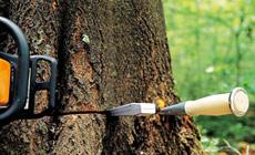 Indispensables dans le travail forestier