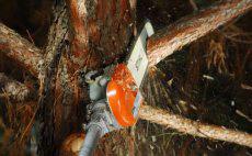 Ferramentas Multifuncionais para o mercado florestal