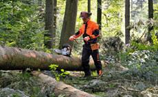 Vêtements forestiers : Ligne DYNAMIC