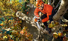 Arborists Chainsaws