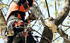 Motoferăstraie pentru îngrijirea pomilor