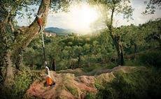 Secoueur d'olives