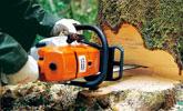 Главни сечи и добив на едроразмерна дървесина