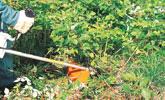 Eliminer les broussailles, roseaux et ronciers