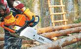 Ścinka i okrzesywanie drzew