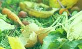 Weicher Gartenabfall und dünnere Äste