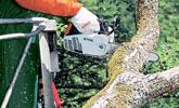 Mantenimiento y clareo de árboles