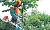Trabajos forestales con desbrozadora