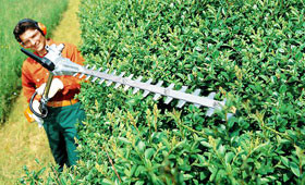 Petrol long-reach hedge trimmers