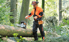 DYNAMIC forestry work overalls