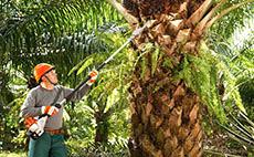 Cortadores de palma para uso agropecuário