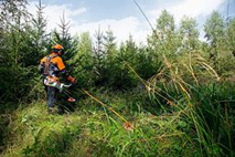 Clearing saws from STIHL
